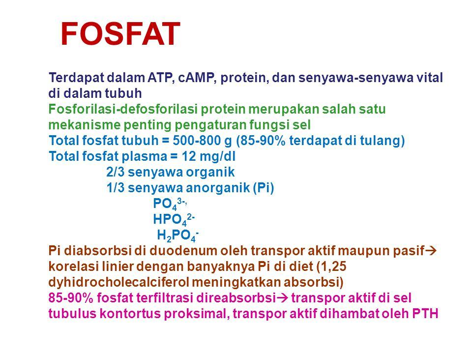 FOSFAT Terdapat dalam ATP, cAMP, protein, dan senyawa-senyawa vital di dalam tubuh Fosforilasi-defosforilasi protein merupakan salah satu mekanisme pe