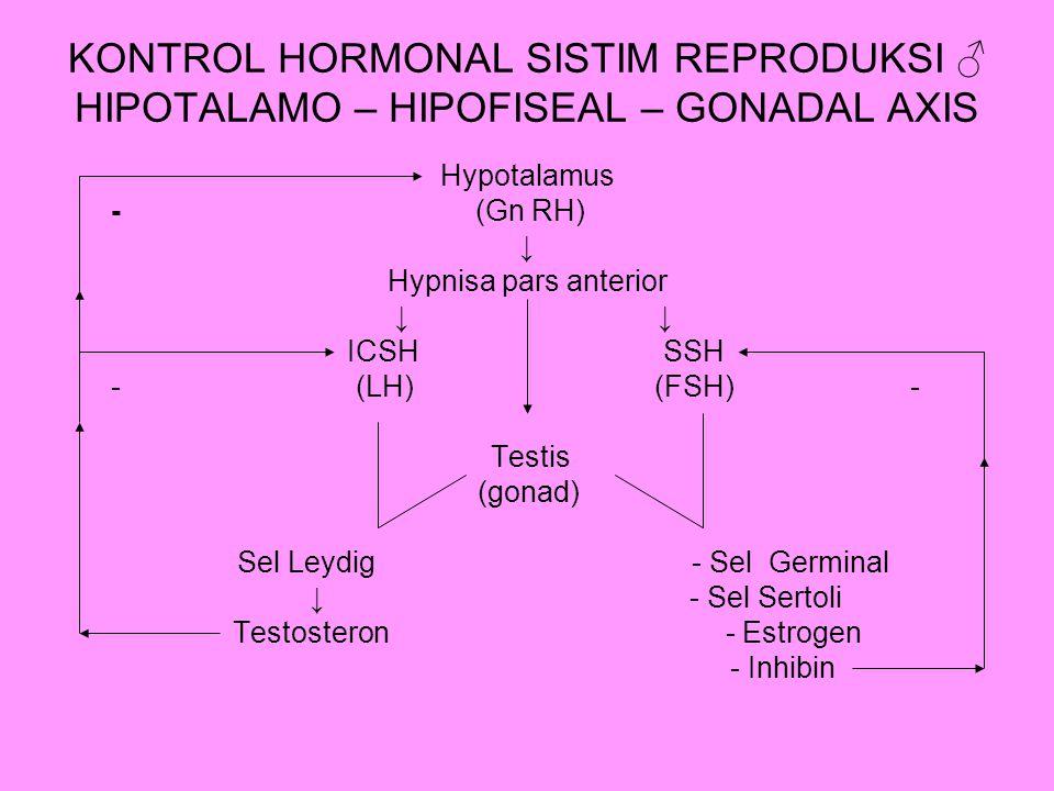 KONTROL HORMONAL SISTIM REPRODUKSI ♂ HIPOTALAMO – HIPOFISEAL – GONADAL AXIS Hypotalamus - (Gn RH) ↓ Hypnisa pars anterior ↓ ↓ ICSH SSH - (LH) (FSH) -