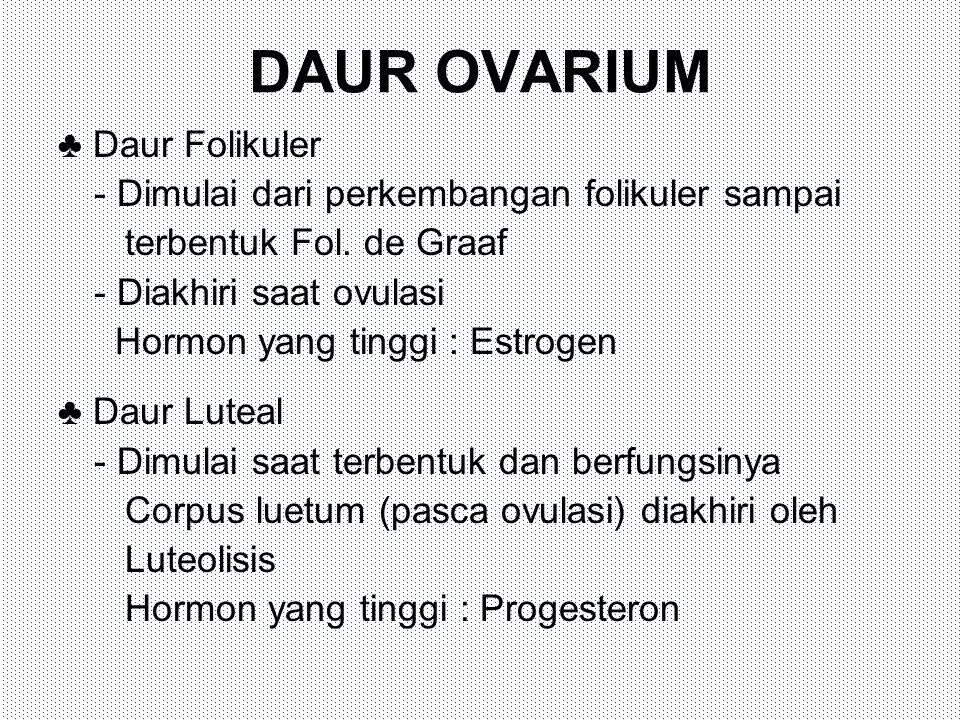 DAUR OVARIUM ♣ Daur Folikuler - Dimulai dari perkembangan folikuler sampai terbentuk Fol. de Graaf - Diakhiri saat ovulasi Hormon yang tinggi : Estrog
