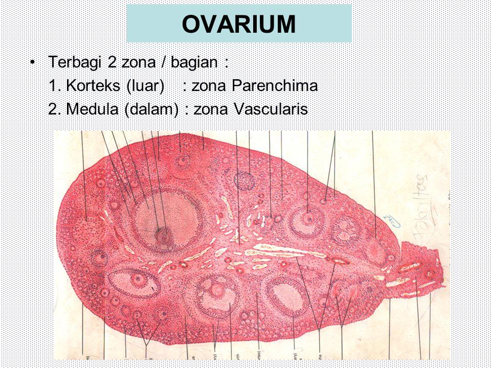 OVARIUM Terbagi 2 zona / bagian : 1. Korteks (luar) : zona Parenchima 2. Medula (dalam) : zona Vascularis