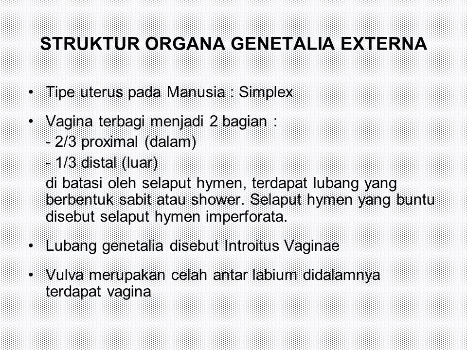 STRUKTUR ORGANA GENETALIA EXTERNA Tipe uterus pada Manusia : Simplex Vagina terbagi menjadi 2 bagian : - 2/3 proximal (dalam) - 1/3 distal (luar) di b