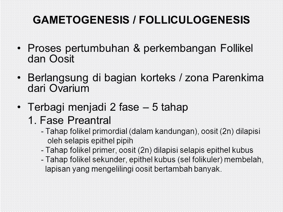 GAMETOGENESIS / FOLLICULOGENESIS Proses pertumbuhan & perkembangan Follikel dan Oosit Berlangsung di bagian korteks / zona Parenkima dari Ovarium Terb