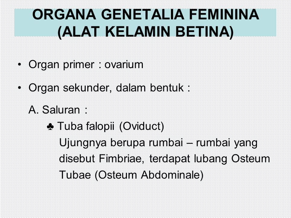 ORGANA GENETALIA FEMININA (ALAT KELAMIN BETINA) Organ primer : ovarium Organ sekunder, dalam bentuk : A. Saluran : ♣ Tuba falopii (Oviduct) Ujungnya b