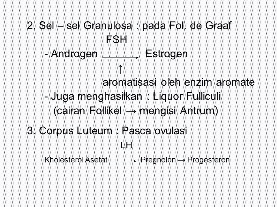 2. Sel – sel Granulosa : pada Fol. de Graaf FSH - Androgen Estrogen ↑ aromatisasi oleh enzim aromate - Juga menghasilkan : Liquor Fulliculi (cairan Fo