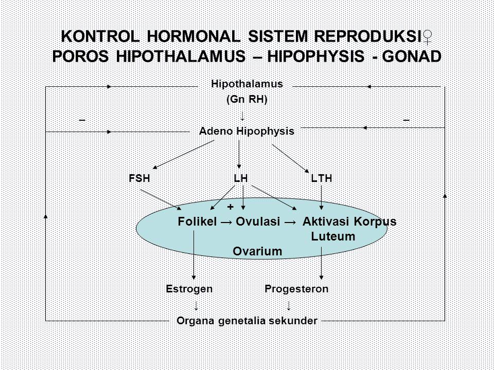 KONTROL HORMONAL SISTEM REPRODUKSI♀ POROS HIPOTHALAMUS – HIPOPHYSIS - GONAD Hipothalamus (Gn RH) _ ↓ _ Adeno Hipophysis FSH LH LTH EstrogenProgesteron