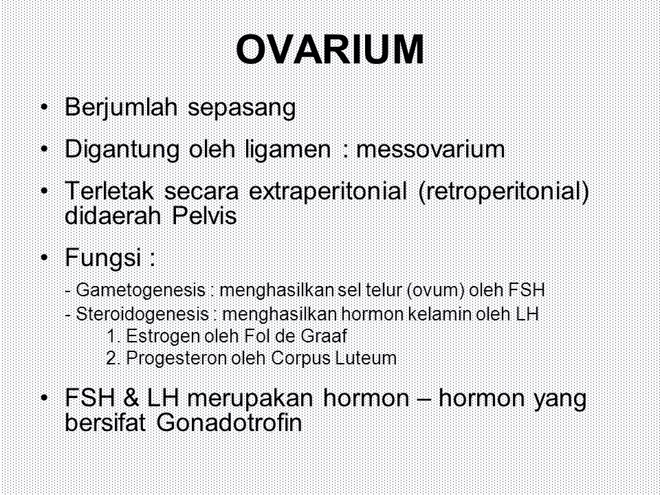 OVARIUM Berjumlah sepasang Digantung oleh ligamen : messovarium Terletak secara extraperitonial (retroperitonial) didaerah Pelvis Fungsi : - Gametogen