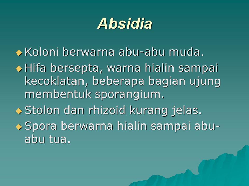 Absidia  Koloni berwarna abu-abu muda.  Hifa bersepta, warna hialin sampai kecoklatan, beberapa bagian ujung membentuk sporangium.  Stolon dan rhiz
