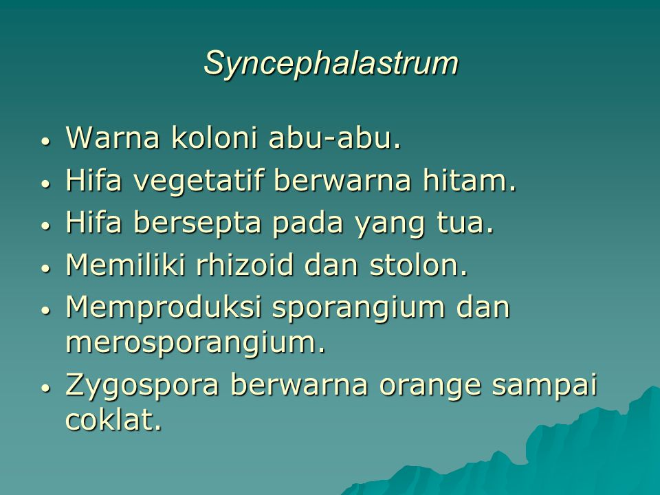 Syncephalastrum Warna koloni abu-abu. Warna koloni abu-abu. Hifa vegetatif berwarna hitam. Hifa vegetatif berwarna hitam. Hifa bersepta pada yang tua.