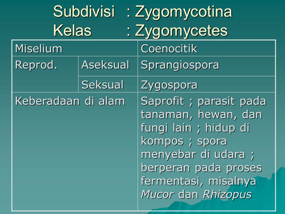 Subdivisi : Zygomycotina Kelas: Zygomycetes Subdivisi : Zygomycotina Kelas: ZygomycetesMiseliumCoenocitik Reprod.AseksualSprangiospora SeksualZygospor