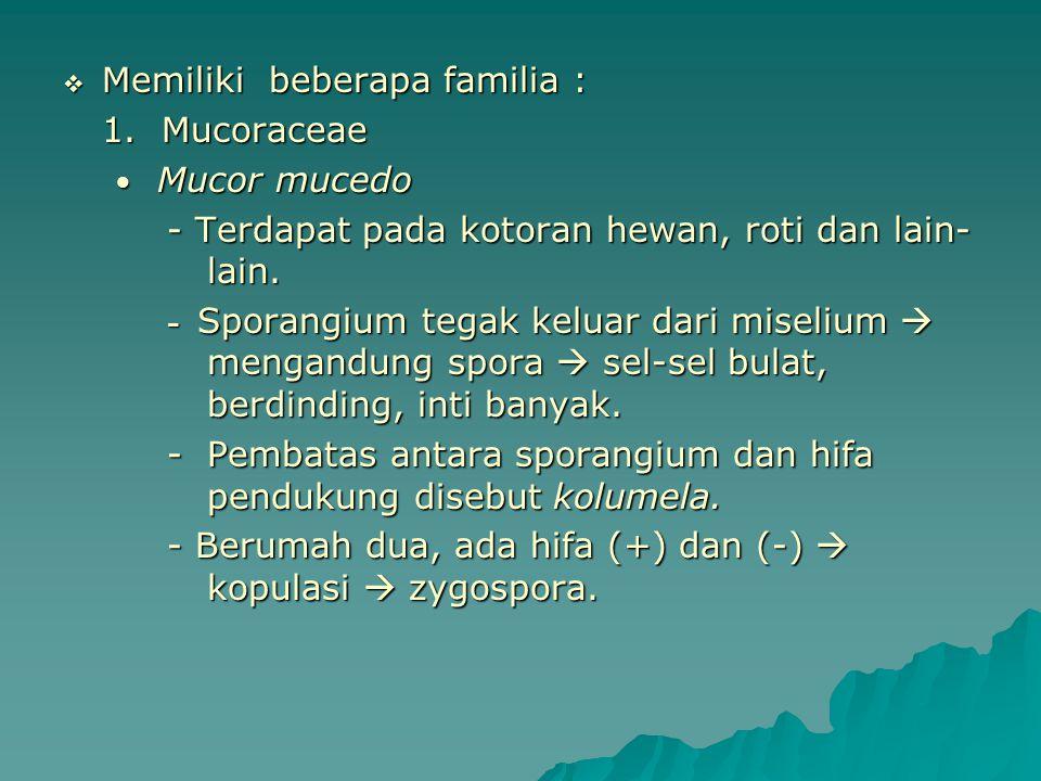  Memiliki beberapa familia : 1. Mucoraceae Mucor mucedo Mucor mucedo - Terdapat pada kotoran hewan, roti dan lain- lain. - Terdapat pada kotoran hewa