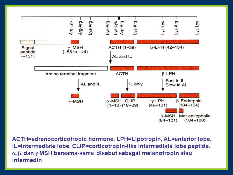 ACTH=adrenocorticotropic hormone, LPH=Lipotropin, AL=anterior lobe, IL=intermediate lobe, CLIP=corticotropin-like intermediate lobe peptide.