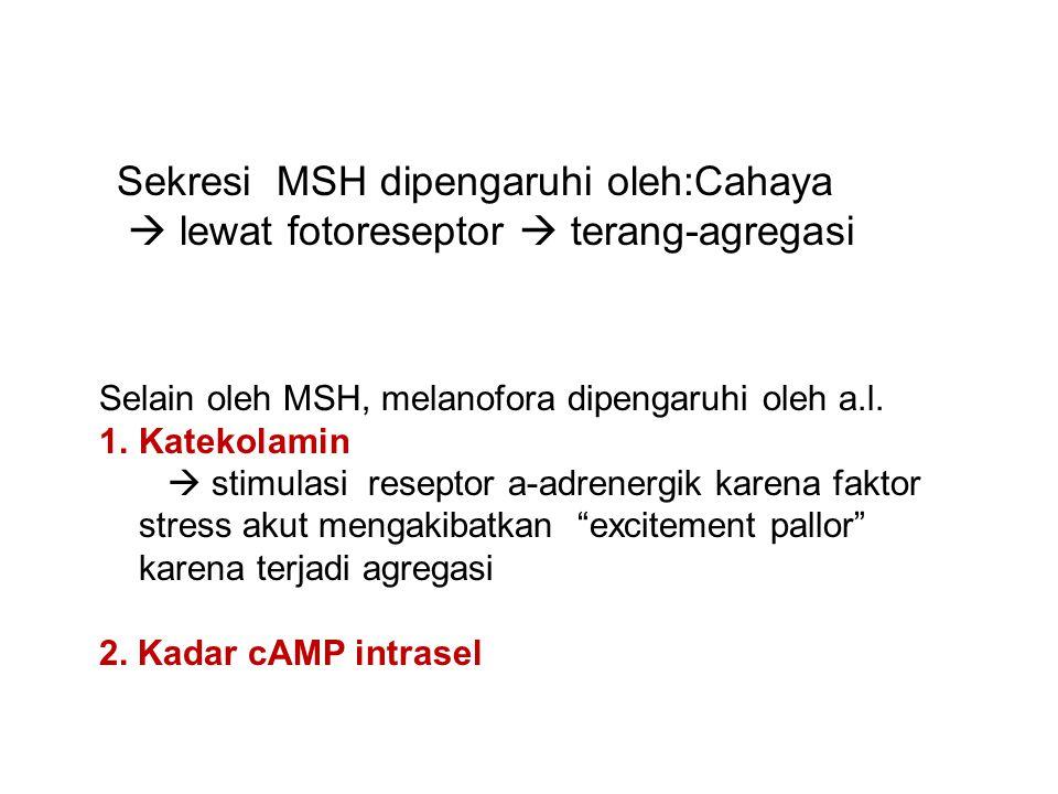 Sekresi MSH dipengaruhi oleh:Cahaya  lewat fotoreseptor  terang-agregasi Selain oleh MSH, melanofora dipengaruhi oleh a.l.