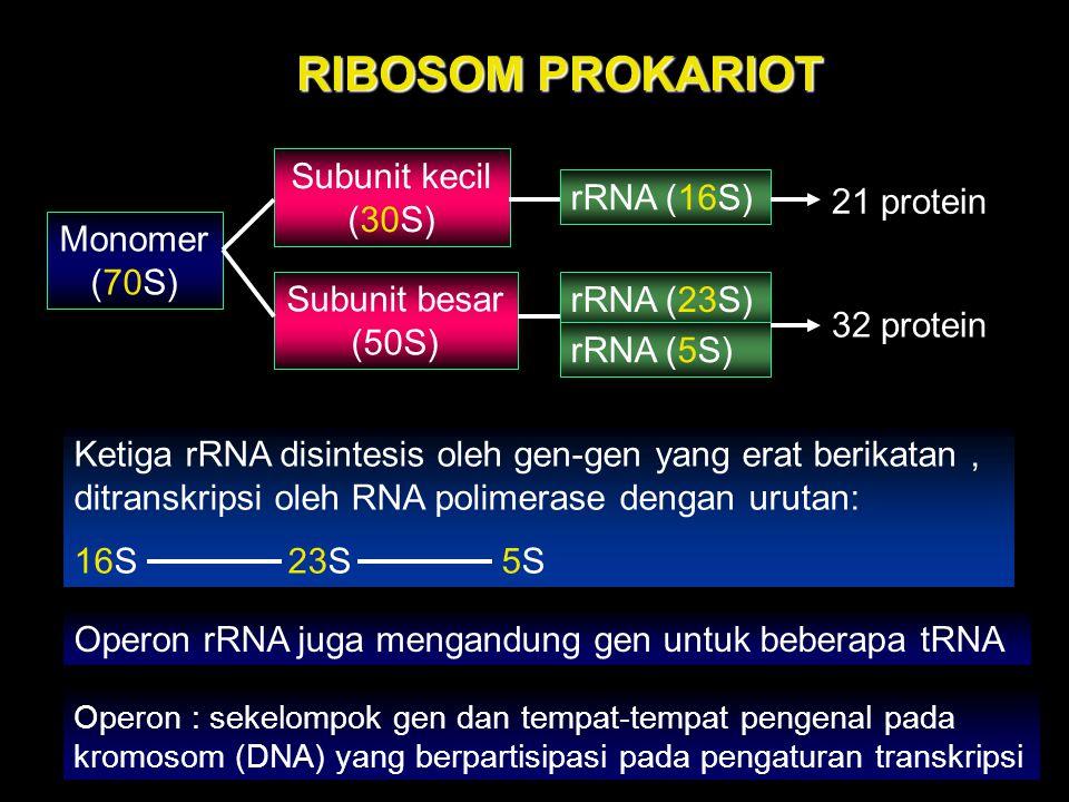 RIBOSOM PROKARIOT Monomer (70S) Subunit kecil (30S) Subunit besar (50S) rRNA (16S) rRNA (23S) rRNA (5S) 21 protein 32 protein Ketiga rRNA disintesis o