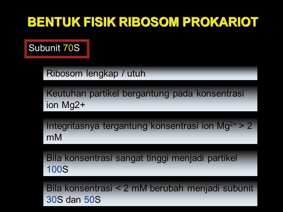 BENTUK FISIK RIBOSOM PROKARIOT Subunit 70S Ribosom lengkap / utuh Integritasnya tergantung konsentrasi ion Mg 2+ > 2 mM Bila konsentrasi sangat tinggi