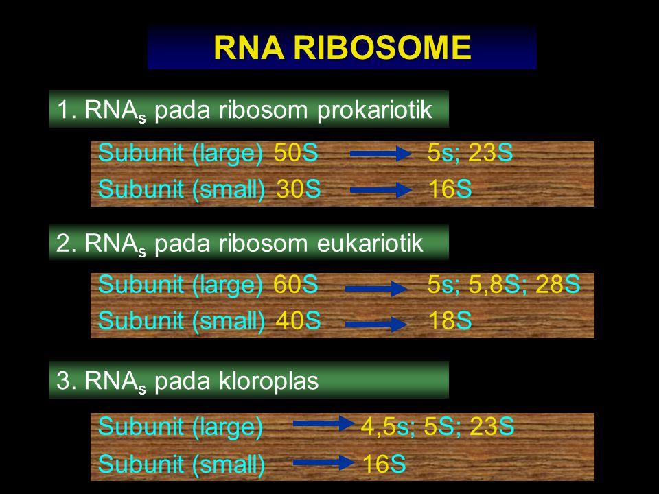 RNA RIBOSOME 1. RNA s pada ribosom prokariotik Subunit (large) 50S5s; 23S Subunit (small) 30S16S 2. RNA s pada ribosom eukariotik Subunit (large) 60S5