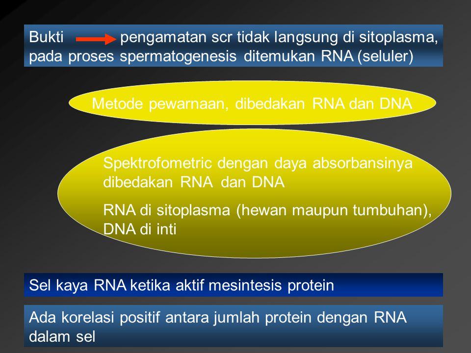 Buktipengamatan scr tidak langsung di sitoplasma, pada proses spermatogenesis ditemukan RNA (seluler) Metode pewarnaan, dibedakan RNA dan DNA Spektrof