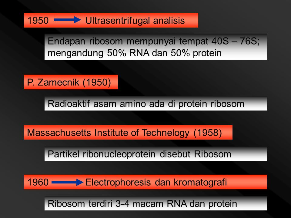 1950Ultrasentrifugal analisis Endapan ribosom mempunyai tempat 40S – 76S; mengandung 50% RNA dan 50% protein P. Zamecnik (1950) Radioaktif asam amino