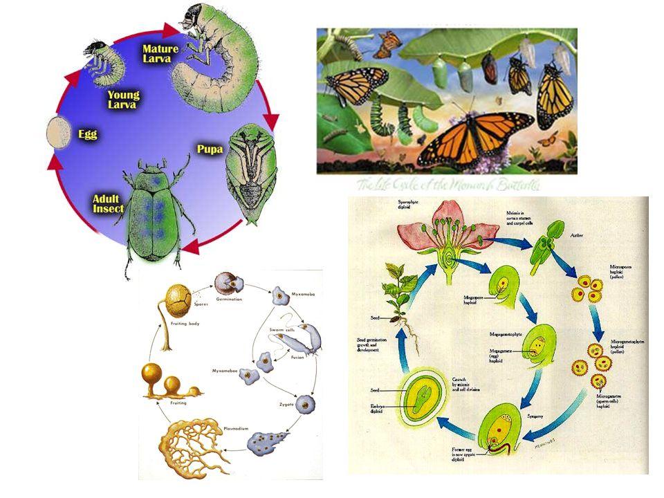 Keterkaitan Struktur dan Fungsi Fungsi selalu sesuai dengan kontruksi struktur Contoh : Sayap burung Sirip Ikan Organ tubuh manusia Membran mitokondria Akar mangrove dll