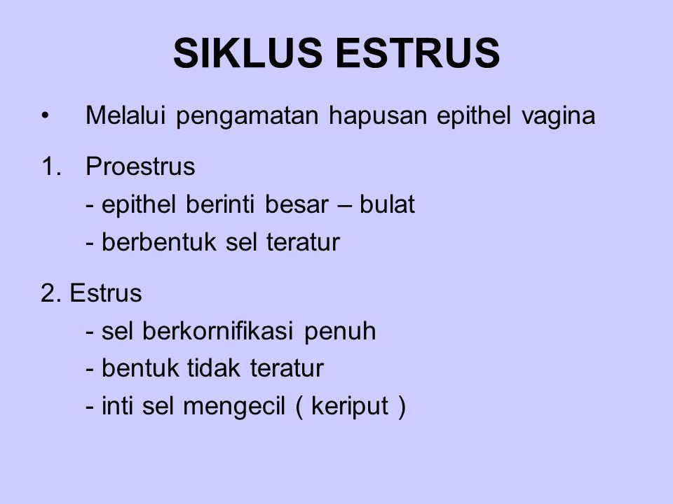 SIKLUS ESTRUS Melalui pengamatan hapusan epithel vagina 1.Proestrus - epithel berinti besar – bulat - berbentuk sel teratur 2. Estrus - sel berkornifi