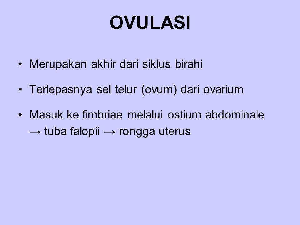 OVULASI Merupakan akhir dari siklus birahi Terlepasnya sel telur (ovum) dari ovarium Masuk ke fimbriae melalui ostium abdominale → tuba falopii → rong