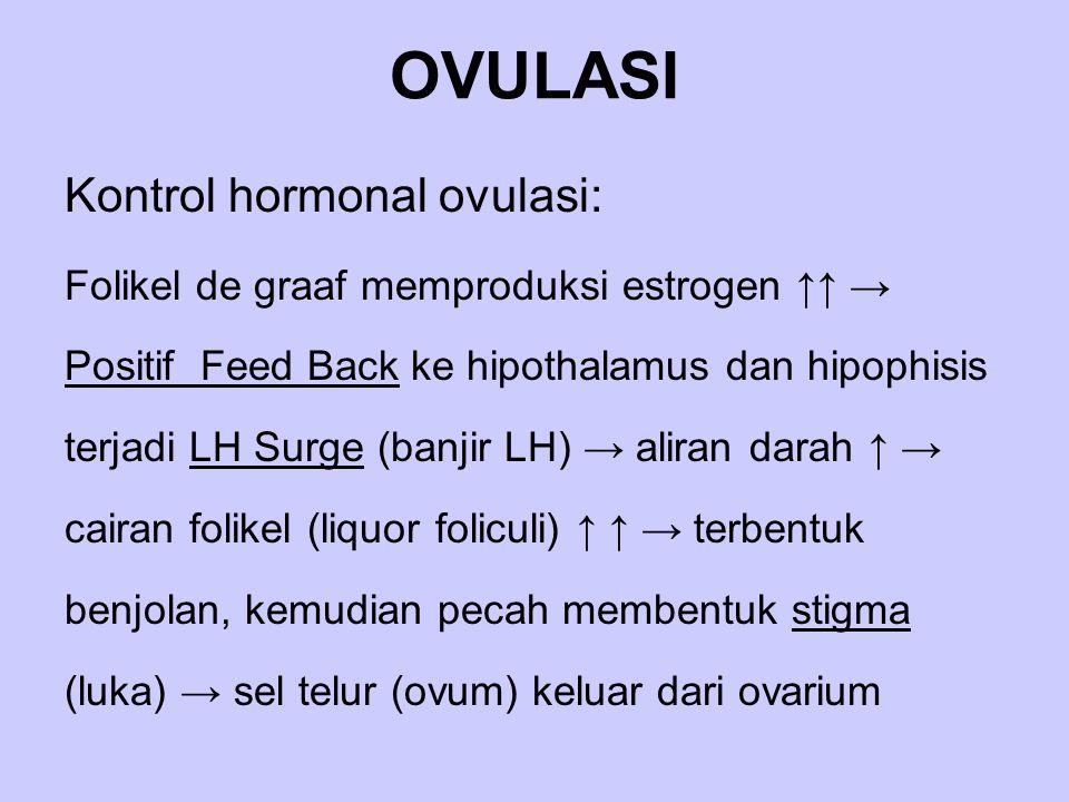 OVULASI Kontrol hormonal ovulasi: Folikel de graaf memproduksi estrogen ↑↑ → Positif Feed Back ke hipothalamus dan hipophisis terjadi LH Surge (banjir