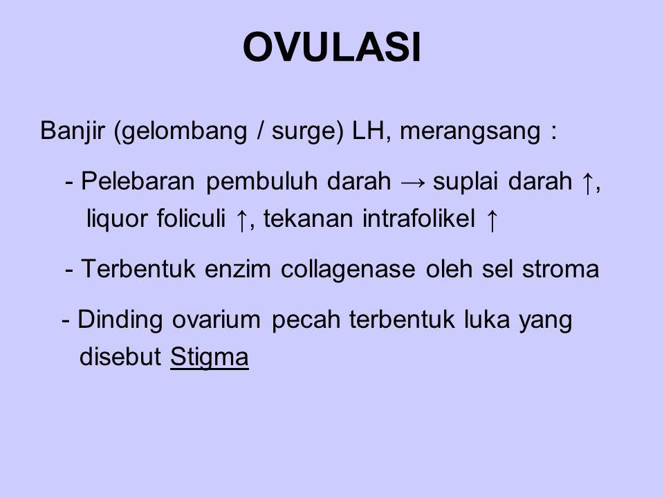 OVULASI Banjir (gelombang / surge) LH, merangsang : - Pelebaran pembuluh darah → suplai darah ↑, liquor foliculi ↑, tekanan intrafolikel ↑ - Terbentuk