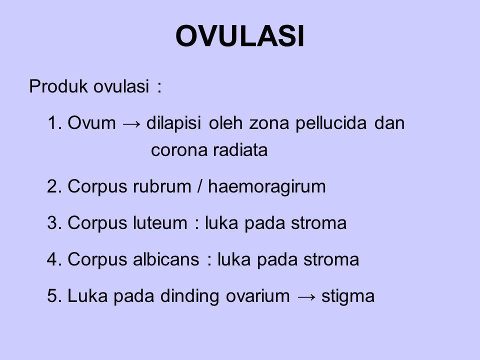 OVULASI Produk ovulasi : 1. Ovum → dilapisi oleh zona pellucida dan corona radiata 2. Corpus rubrum / haemoragirum 3. Corpus luteum : luka pada stroma