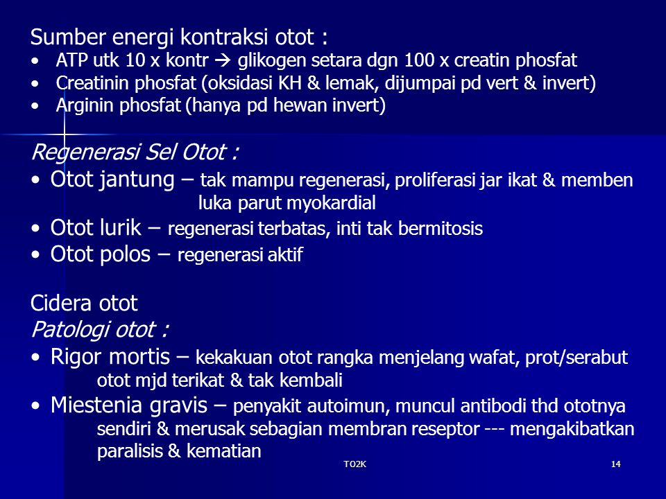 TO2K14 Sumber energi kontraksi otot : ATP utk 10 x kontr  glikogen setara dgn 100 x creatin phosfat Creatinin phosfat (oksidasi KH & lemak, dijumpai pd vert & invert) Arginin phosfat (hanya pd hewan invert) Regenerasi Sel Otot : Otot jantung – tak mampu regenerasi, proliferasi jar ikat & memben luka parut myokardial Otot lurik – regenerasi terbatas, inti tak bermitosis Otot polos – regenerasi aktif Cidera otot Patologi otot : Rigor mortis – kekakuan otot rangka menjelang wafat, prot/serabut otot mjd terikat & tak kembali Miestenia gravis – penyakit autoimun, muncul antibodi thd ototnya sendiri & merusak sebagian membran reseptor --- mengakibatkan paralisis & kematian