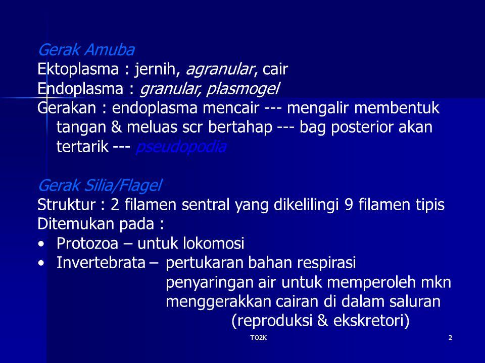 TO2K2 Gerak Amuba Ektoplasma : jernih, agranular, cair Endoplasma : granular, plasmogel Gerakan : endoplasma mencair --- mengalir membentuk tangan & m
