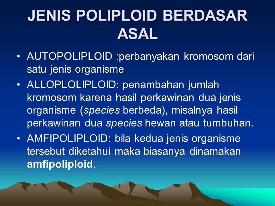 JENIS POLIPLOID BERDASAR ASAL AUTOPOLIPLOID :perbanyakan kromosom dari satu jenis organisme ALLOPLOLIPLOID: penambahan jumlah kromosom karena hasil pe
