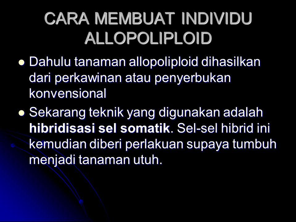 CARA MEMBUAT INDIVIDU ALLOPOLIPLOID Dahulu tanaman allopoliploid dihasilkan dari perkawinan atau penyerbukan konvensional Dahulu tanaman allopoliploid