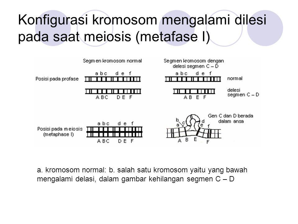 Konfigurasi kromosom mengalami dilesi pada saat meiosis (metafase I) a. kromosom normal: b. salah satu kromosom yaitu yang bawah mengalami delasi, dal