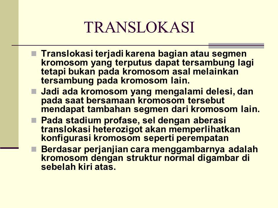 TRANSLOKASI Translokasi terjadi karena bagian atau segmen kromosom yang terputus dapat tersambung lagi tetapi bukan pada kromosom asal melainkan tersa