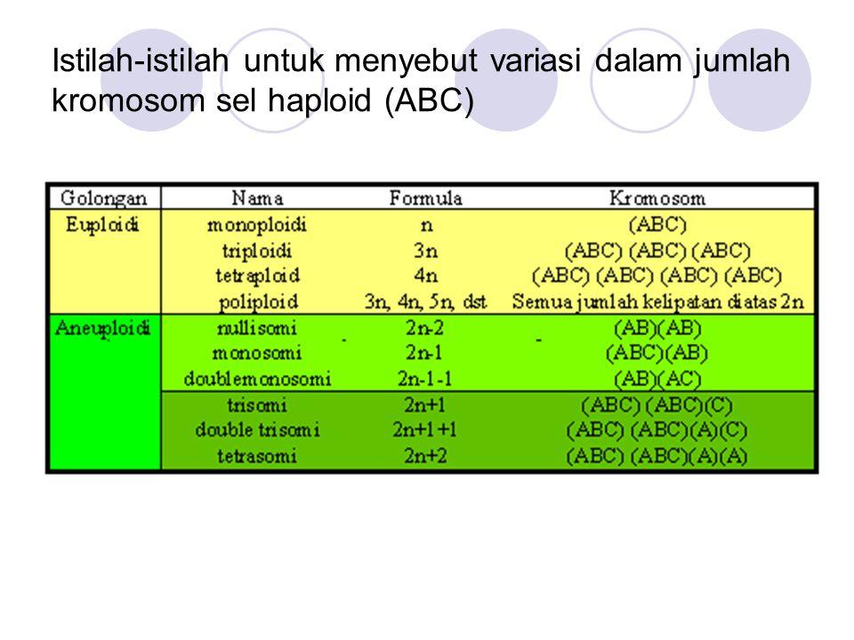 Istilah-istilah untuk menyebut variasi dalam jumlah kromosom sel haploid (ABC)