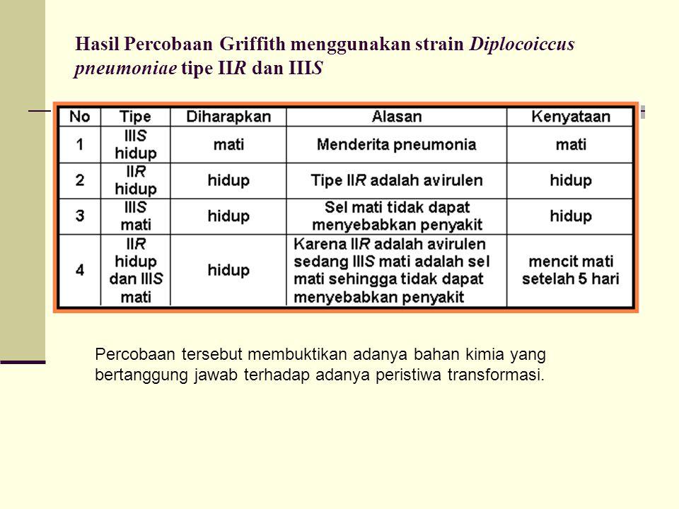 Hasil Percobaan Griffith menggunakan strain Diplocoiccus pneumoniae tipe IIR dan IIIS Percobaan tersebut membuktikan adanya bahan kimia yang bertanggu