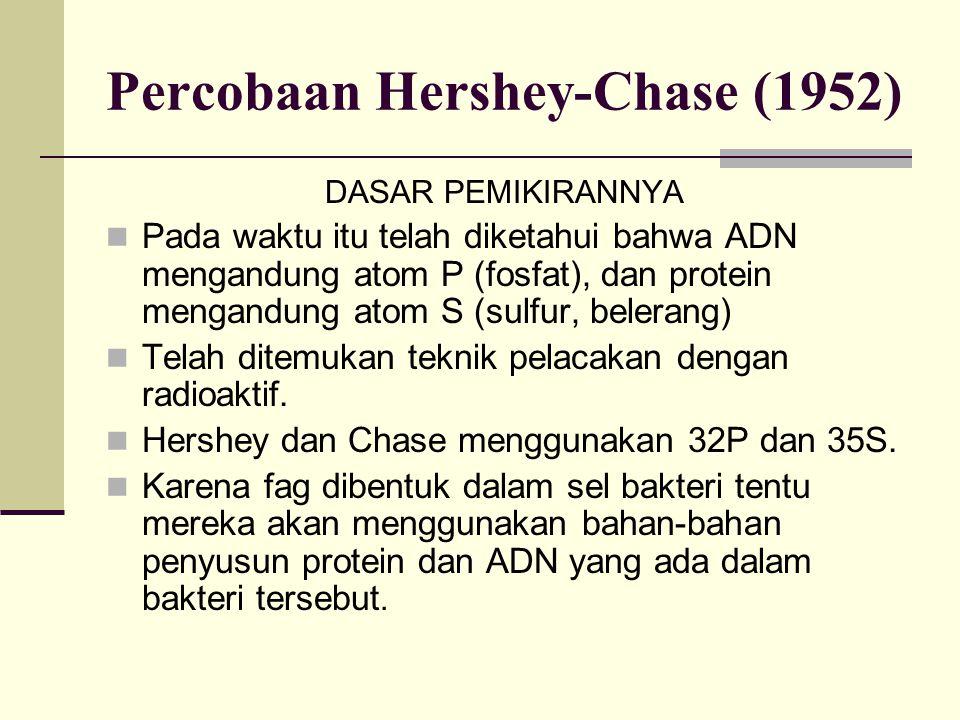 Percobaan Hershey-Chase (1952) DASAR PEMIKIRANNYA Pada waktu itu telah diketahui bahwa ADN mengandung atom P (fosfat), dan protein mengandung atom S (