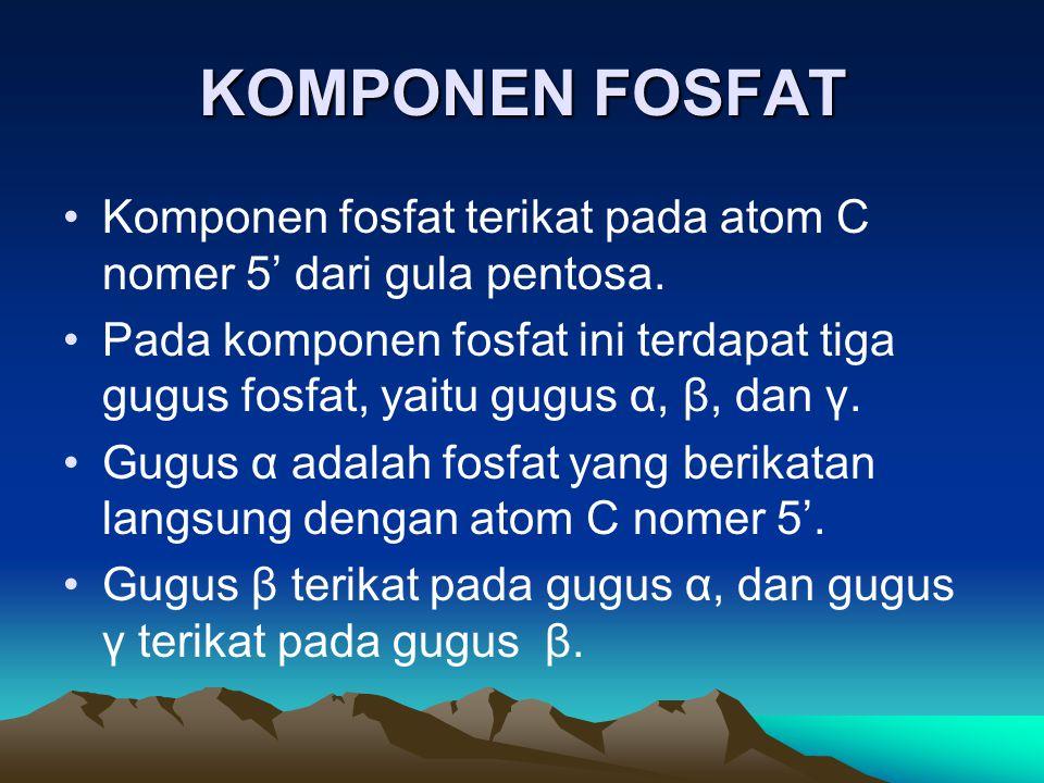 KOMPONEN FOSFAT Komponen fosfat terikat pada atom C nomer 5' dari gula pentosa. Pada komponen fosfat ini terdapat tiga gugus fosfat, yaitu gugus α, β,
