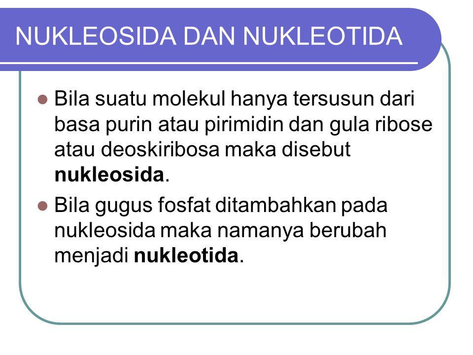 NUKLEOSIDA DAN NUKLEOTIDA Bila suatu molekul hanya tersusun dari basa purin atau pirimidin dan gula ribose atau deoskiribosa maka disebut nukleosida.