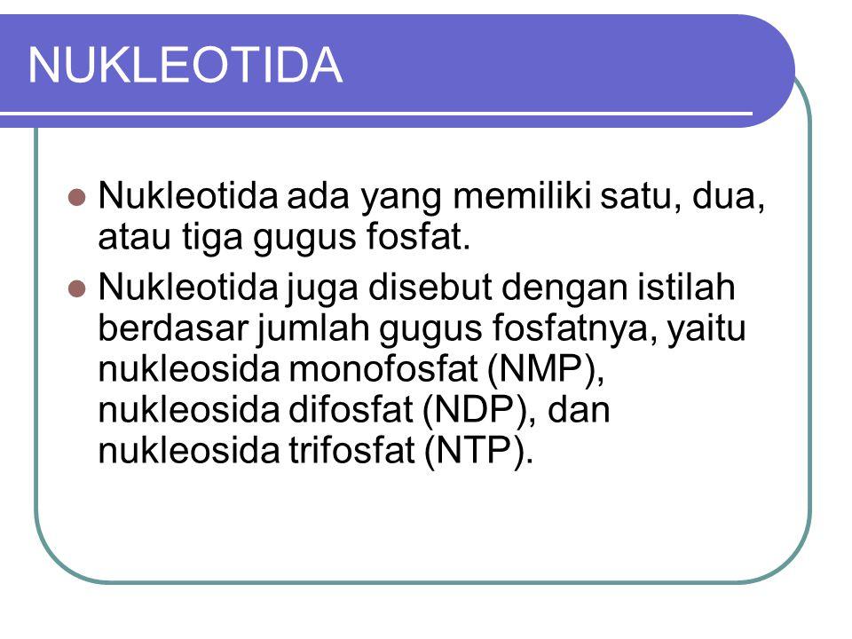 NUKLEOTIDA Nukleotida ada yang memiliki satu, dua, atau tiga gugus fosfat. Nukleotida juga disebut dengan istilah berdasar jumlah gugus fosfatnya, yai