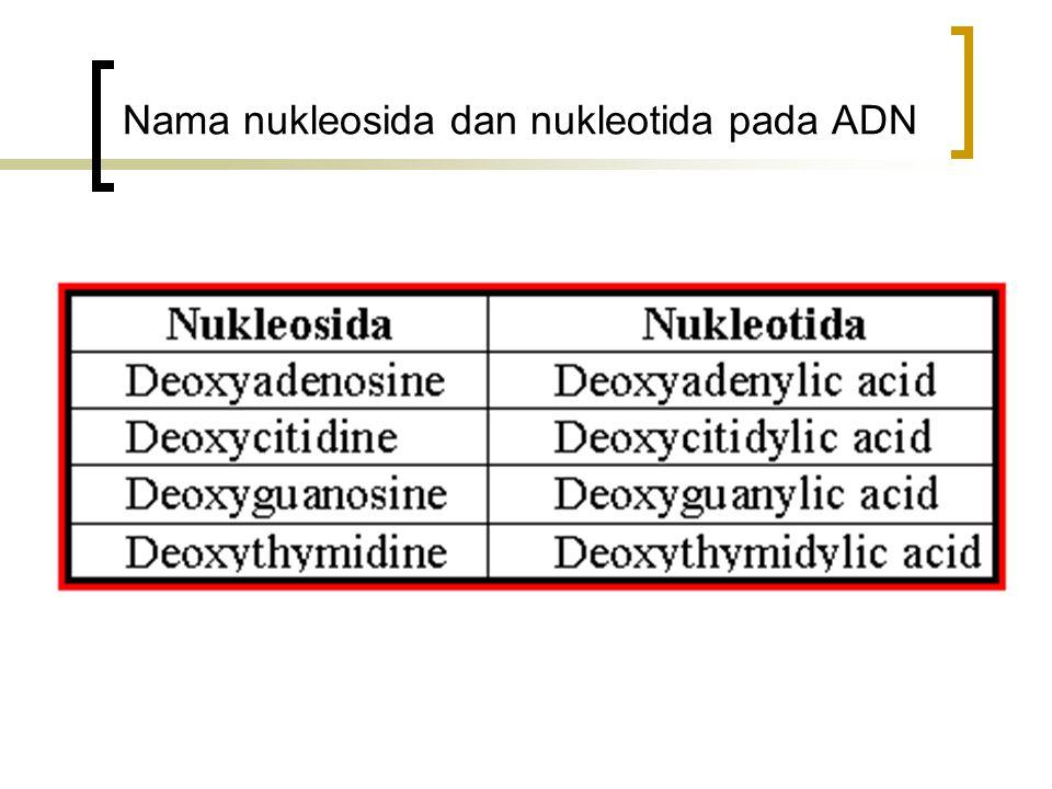 Nama nukleosida dan nukleotida pada ADN