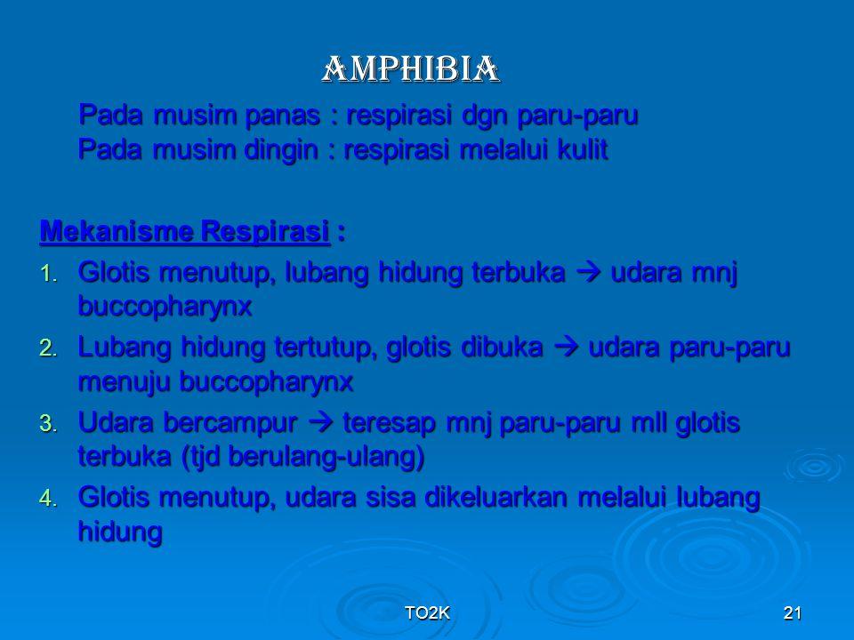 TO2K21 AMPHIBIA Pada musim panas : respirasi dgn paru-paru Pada musim dingin : respirasi melalui kulit Pada musim panas : respirasi dgn paru-paru Pada