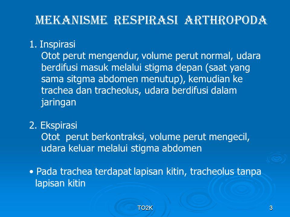 TO2K24 ADAPTASI AVES  Kantong udara & tulang yg berisi udara, vol trakhea lebih panjang  vol total respirasi = 3x mamalia  Keuntungan : mengambil O 2 lebih banyak & tubuh ringan  Kantong udara  berperan pergerakan udara (tempat penyimpan) …… tidak tervaskularisasi, tidak ada lipatan perluasan permukaan  Pada tempat tinggi 6100 m/ tekanan 350 mm Hg : burung pipit masih dapat terbang, mencit sudah merangkak (ukuran tubuh, afinitas thd O 2 & laju metabolime hampir sama)  burung mampu mengambil banyak O 2 dr udara  Di pegunungan Himalaya : burung dapat bertahan hidup, pendaki gunung tak mampu berjalan bila tanpa bantuan O 2