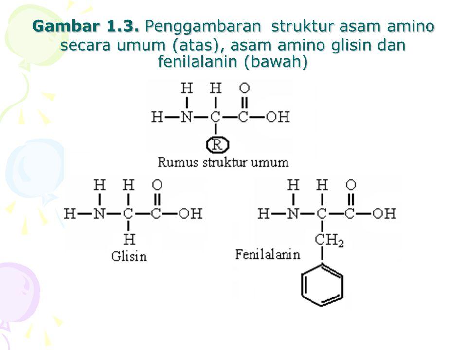 Gambar 1.3. Penggambaran struktur asam amino secara umum (atas), asam amino glisin dan fenilalanin (bawah)