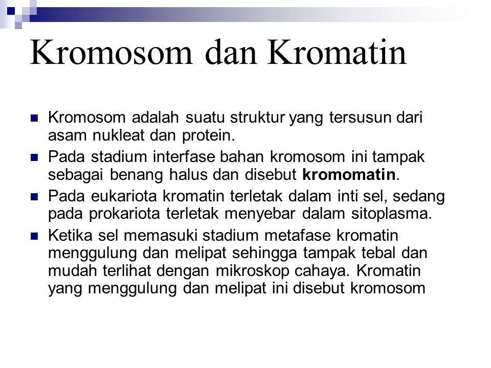 Kromosom dan Kromatin Kromosom adalah suatu struktur yang tersusun dari asam nukleat dan protein. Pada stadium interfase bahan kromosom ini tampak seb