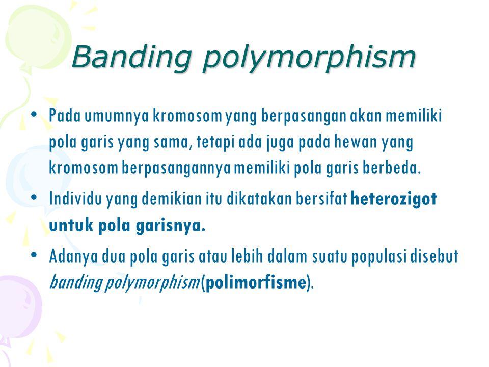 Banding polymorphism Pada umumnya kromosom yang berpasangan akan memiliki pola garis yang sama, tetapi ada juga pada hewan yang kromosom berpasanganny