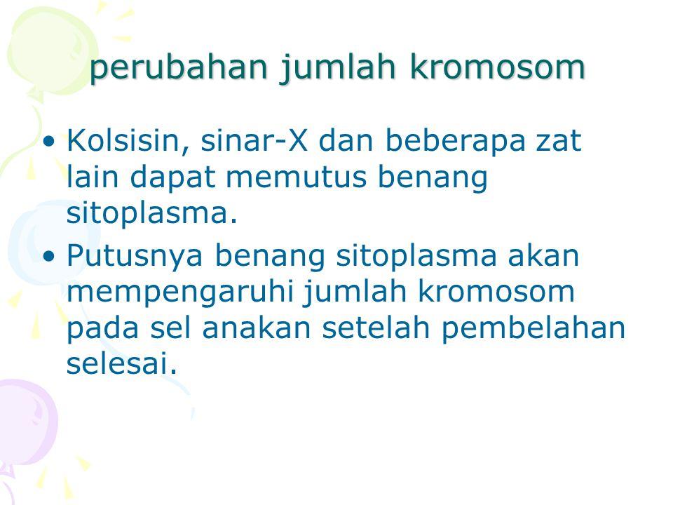 perubahan jumlah kromosom Kolsisin, sinar-X dan beberapa zat lain dapat memutus benang sitoplasma. Putusnya benang sitoplasma akan mempengaruhi jumlah