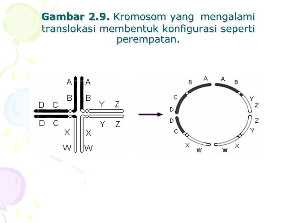 Gambar 2.9. Kromosom yang mengalami translokasi membentuk konfigurasi seperti perempatan.