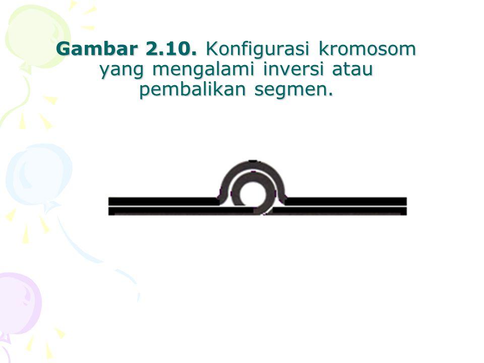 Gambar 2.10. Konfigurasi kromosom yang mengalami inversi atau pembalikan segmen.