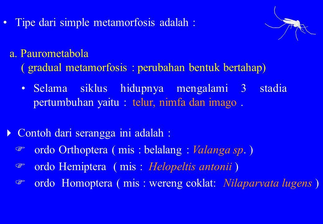 a. Paurometabola ( gradual metamorfosis : perubahan bentuk bertahap)  Contoh dari serangga ini adalah :  ordo Orthoptera ( mis : belalang : Valanga