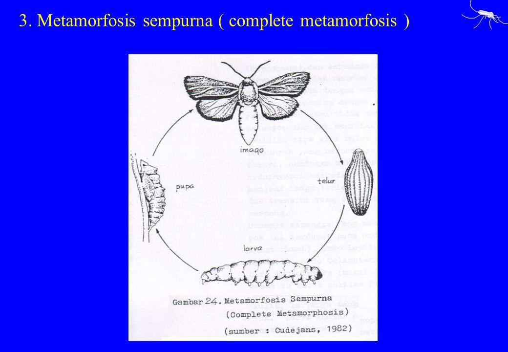 3. Metamorfosis sempurna ( complete metamorfosis )